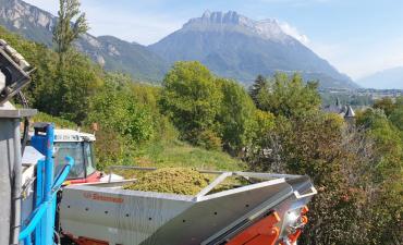 Vendanges-octobre-20-Vullien-Savoie